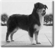 Greyscale image of a dog that is standing on its four legs and looking to the side.